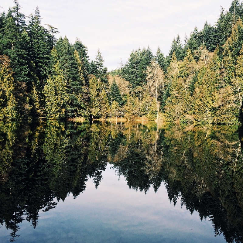 Photo take on a recent hike in Bellingham to Fragrance Lake.