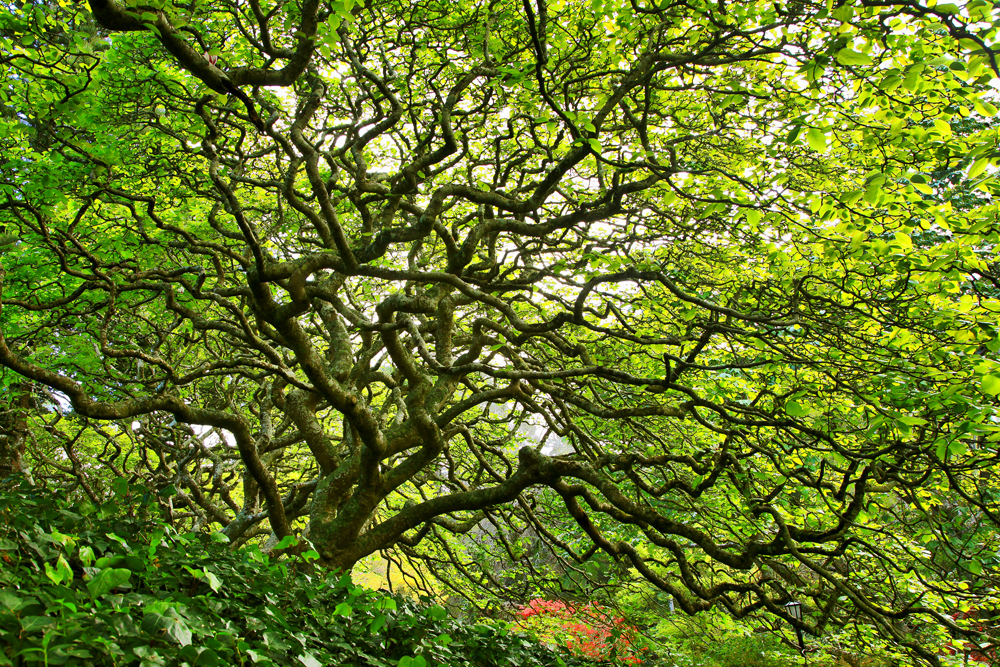 wellingtontree2-web.jpg