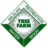 tree farm.jpg