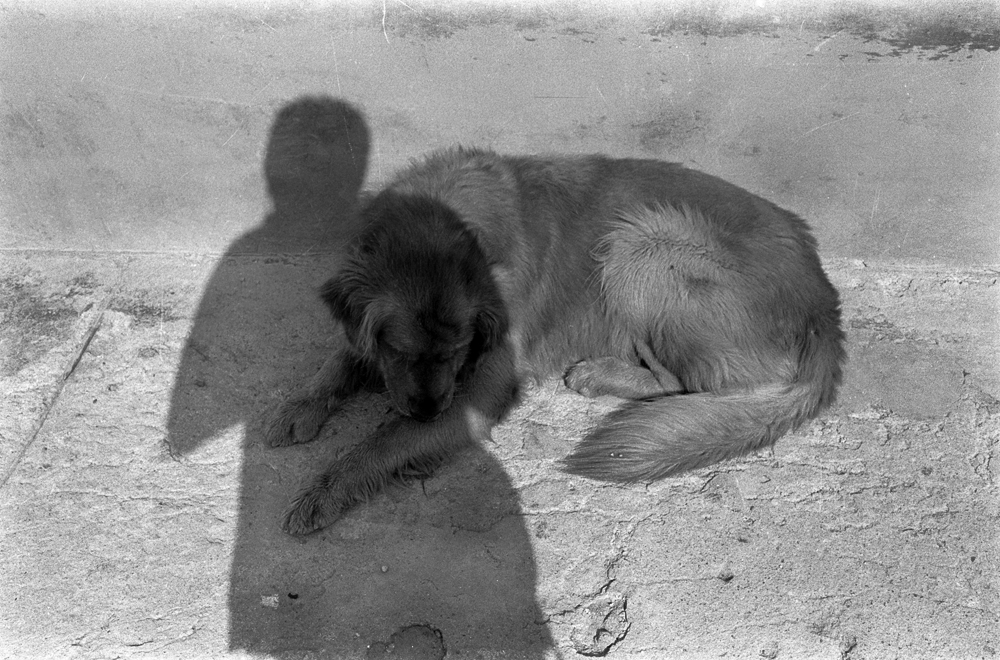 El Perro y la sombra