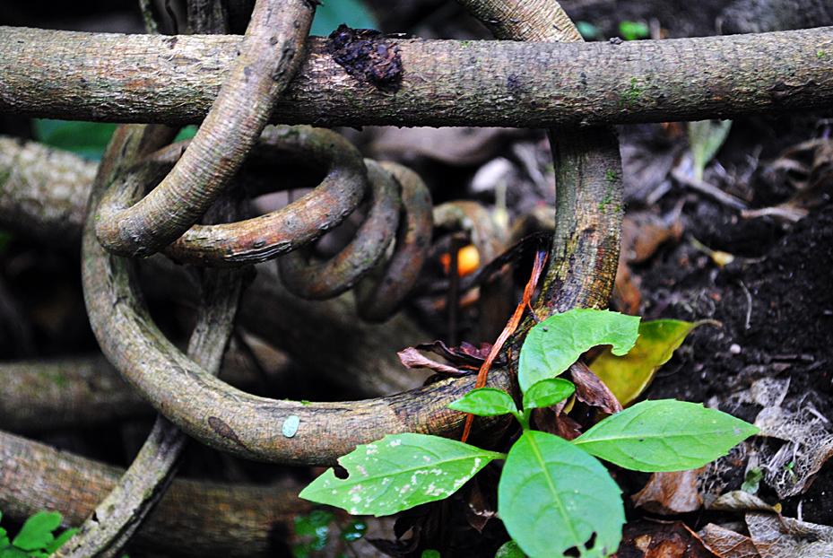 green stemmed plant