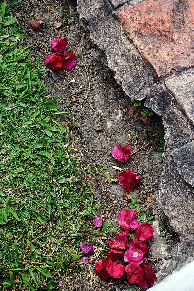 pink sidewalk flowers