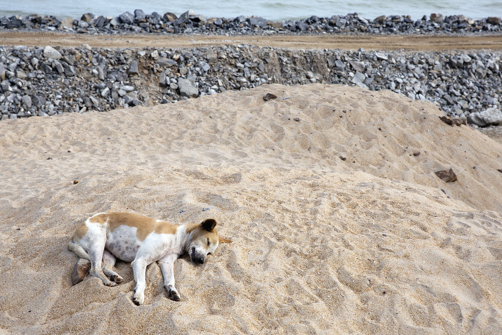 A sweet pup sleeps on the beach in front of the Stumble Inn