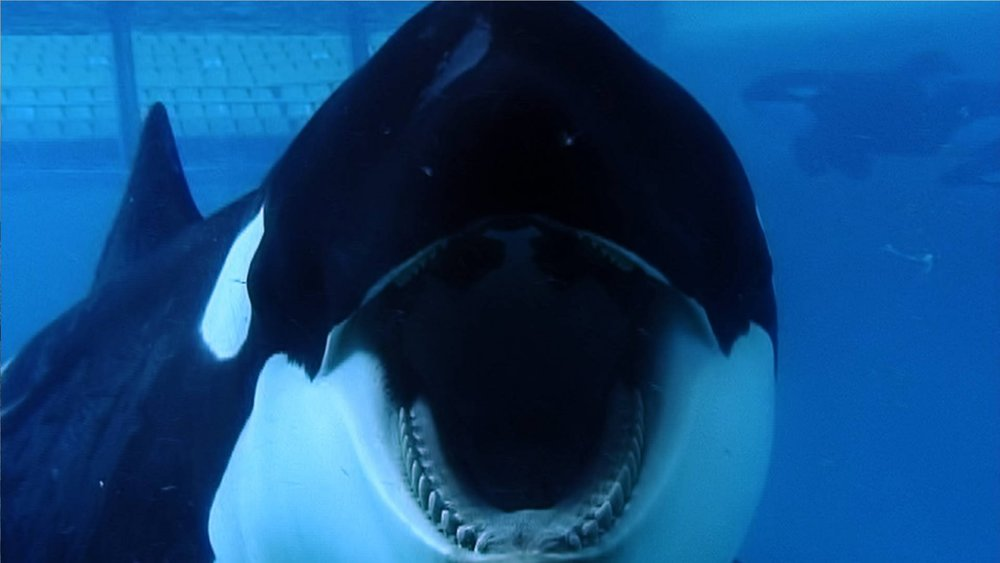 Blackfish_Dogwoof_Documentary_7_1600_900_85.jpg