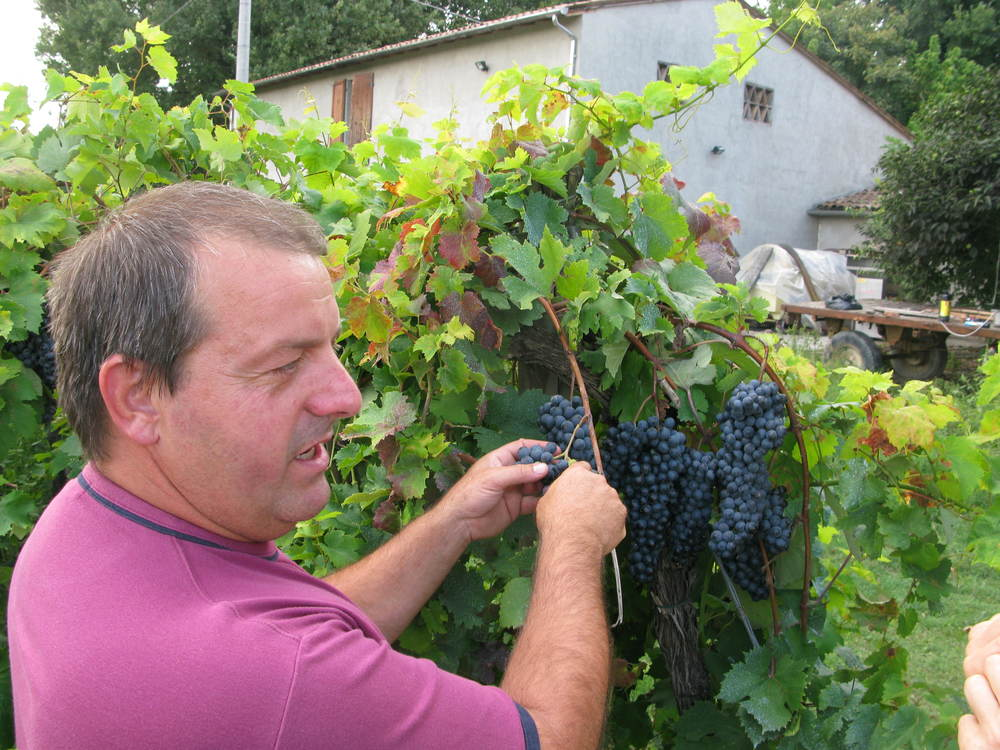 Daniele Longanesi: His grandfather had a grape variety named after him