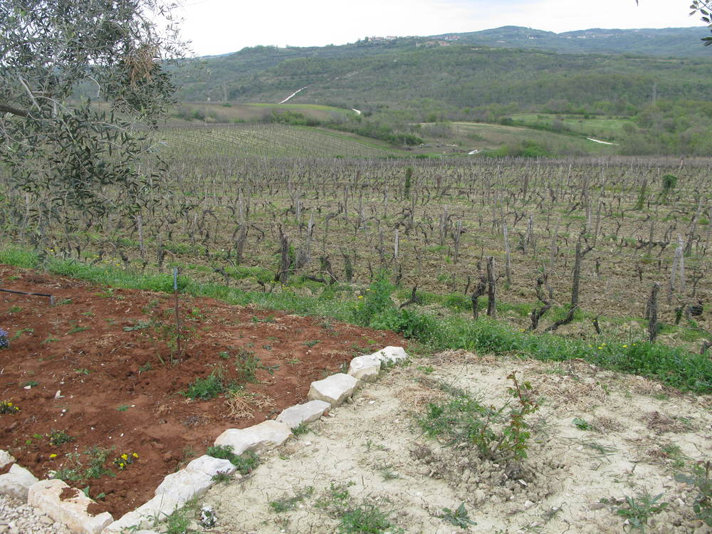 Cattunar makes wine from all four types of soil in Istria