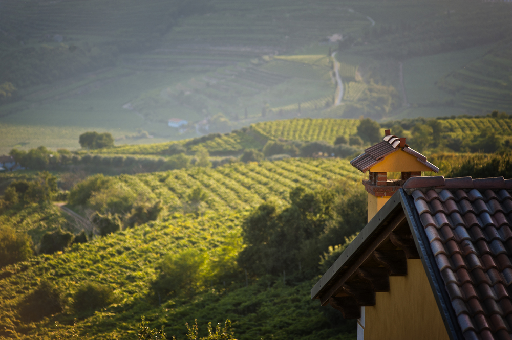 The Coffele vineyards in Soave, northern Italy