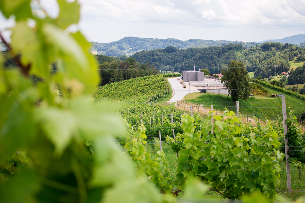 The views from many of the vineyards are amazing. This is one of the new wineries in Slovenia