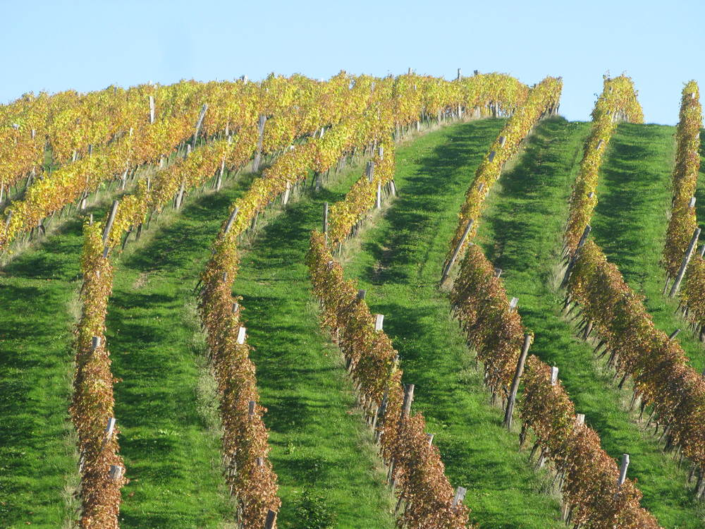 This is a wine country, with most hills covered by vines