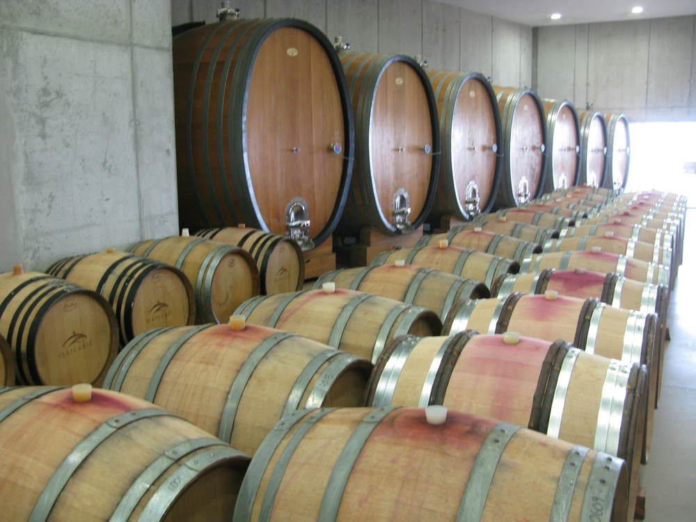 Inside a barrel room, where great Pinot Noirs are made