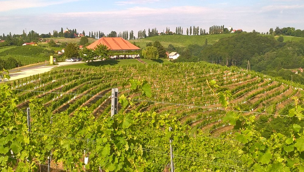 Another inspiring view of Jeruzalem, Slovenia, and one of the wine tasting places we will visit on this wine break