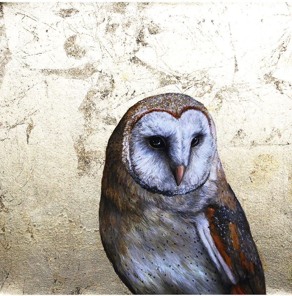 owl 50 x 50.jpg