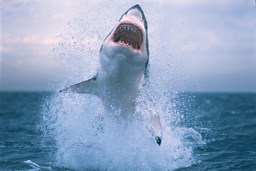 Water_Wave_Surfing_1600x12001.jpg