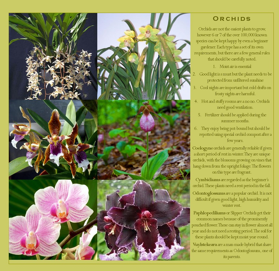 Orchids that can be grown in your vertical garden
