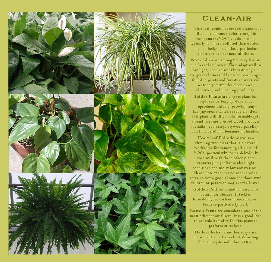 Plants which purify the air that can be grown in your vertical garden