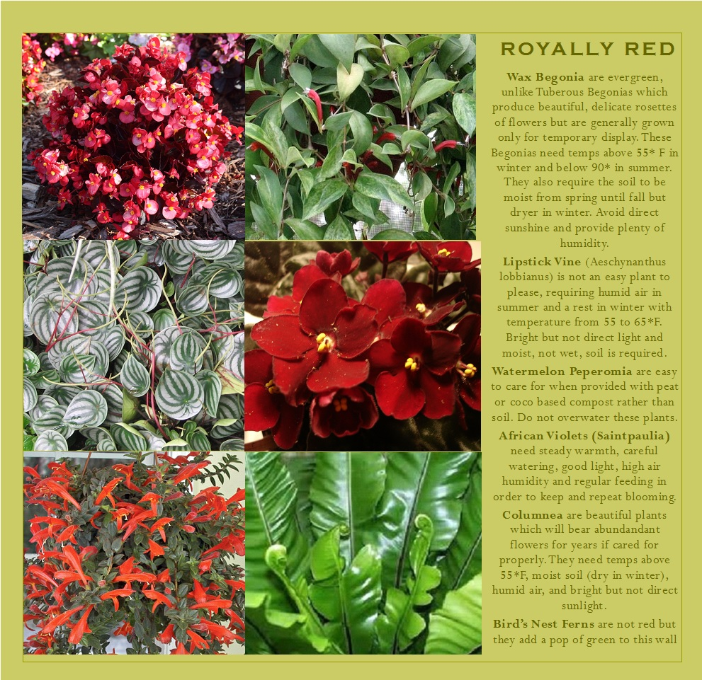 Plants with red foliage or blossoms that can be grown in your vertical garden.