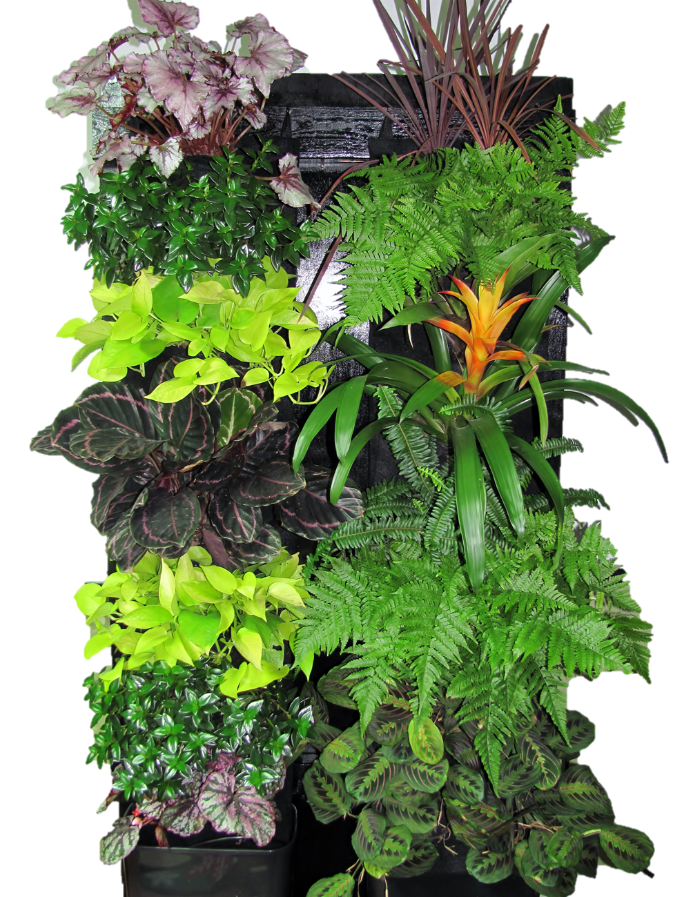 Tropical Vertical Garden Kit Edible Walls