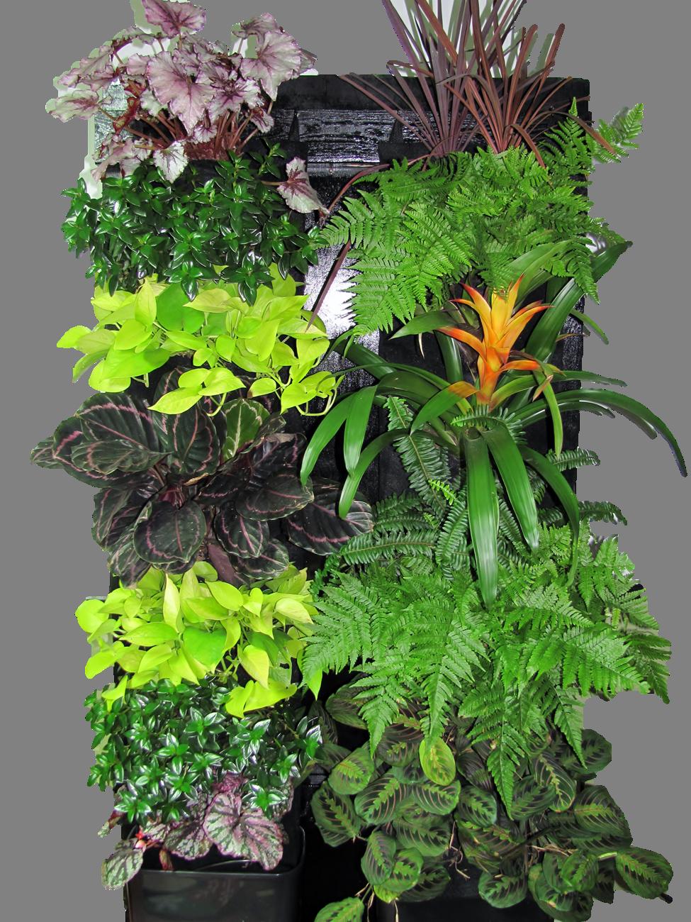Tropical Vertical Garden Kit Edible Walls