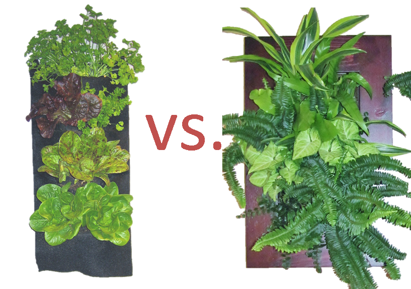 plant image 2.png