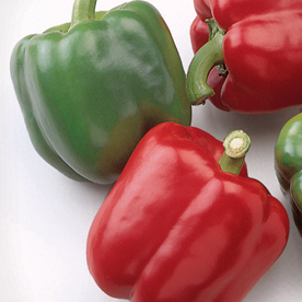 Red Baron Bell Peppers.jpg