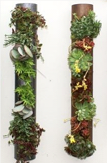 Succulents and Tropical Plants Vertical on Walls or Laid on Tables or Windowsills