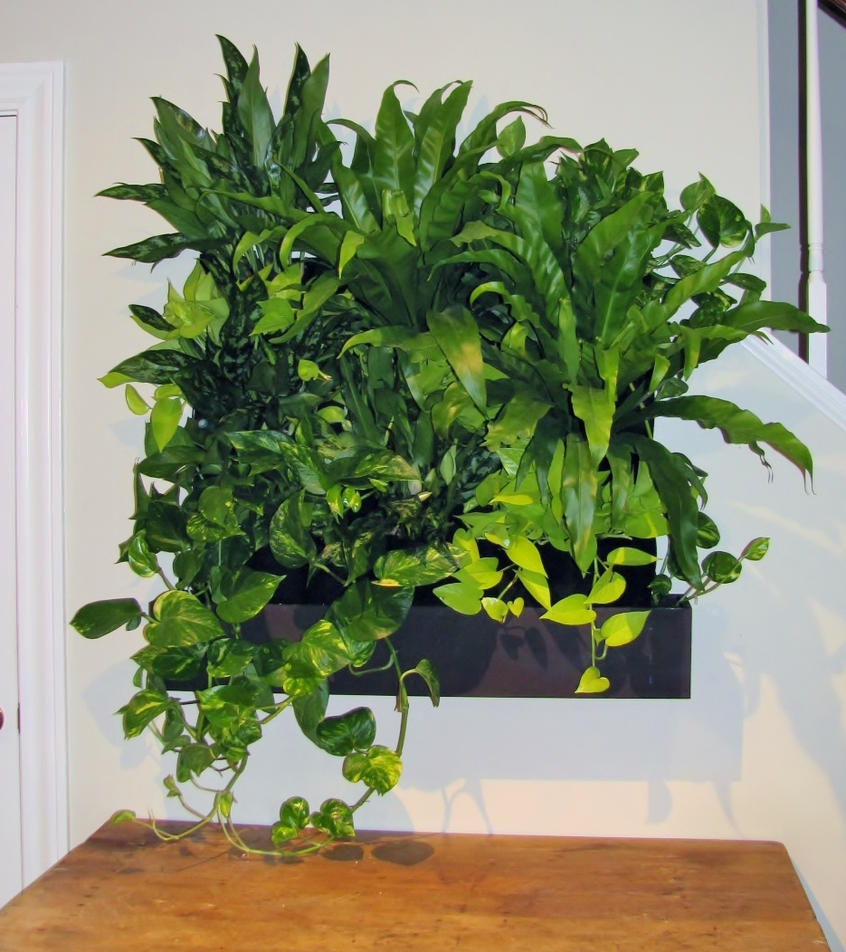 Living Wall Kit - Watered Automatically!