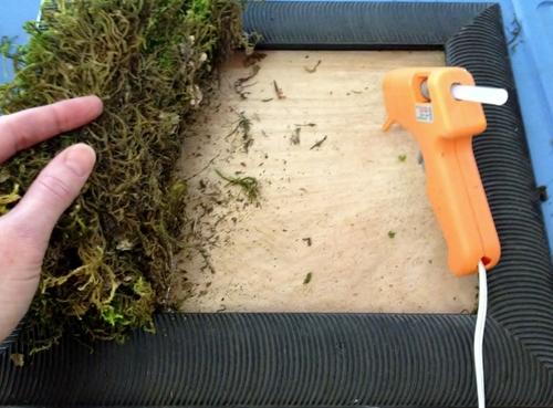 Diy Living Wall diy kit for moss living wall — edible walls