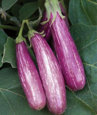 Little Fingers Eggplant
