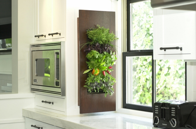 Herb, Vegetable and Fruit Garden Growing Vertically in the Kitchen of this Home