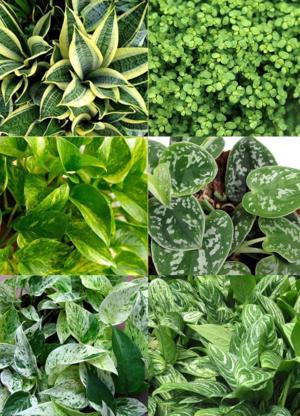 Choosing Plants Edible Walls