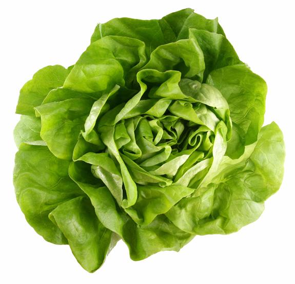 Butterhead (Bibb) Lettuce