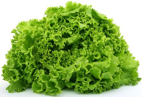 Салат листья простыеы