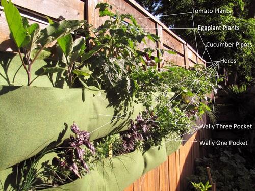 Living Wall Planter cucumber garden - woolly living wall planter — edible walls