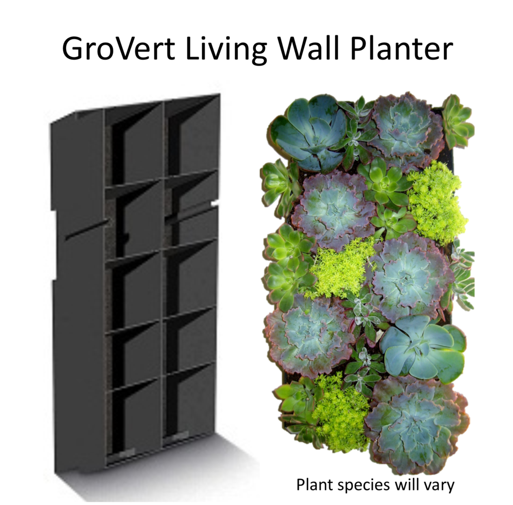 Superbe Succulent Collection   GroVert Living Wall Planter