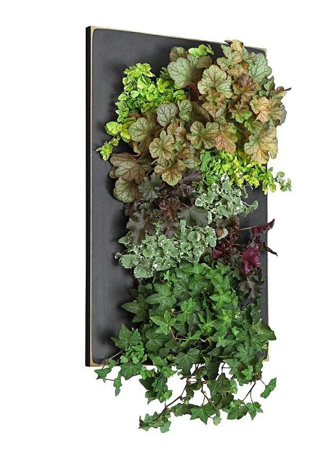 Black Framed GroVert Living Wall Kit Edible Walls