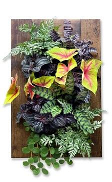 Walnut framed grovert living wall kit edible walls - Indoor living wall planter ...