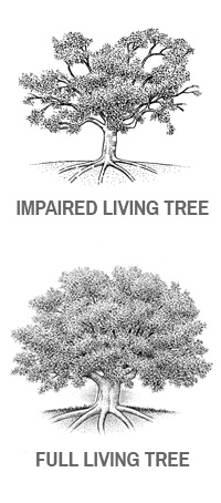 tree-comparrison.jpg