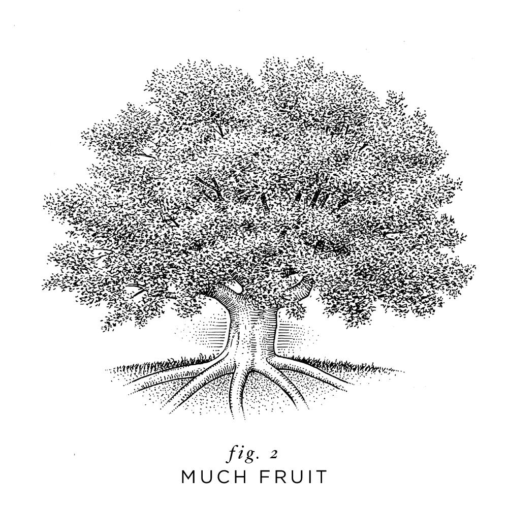 small Dodd Tree final.jpg