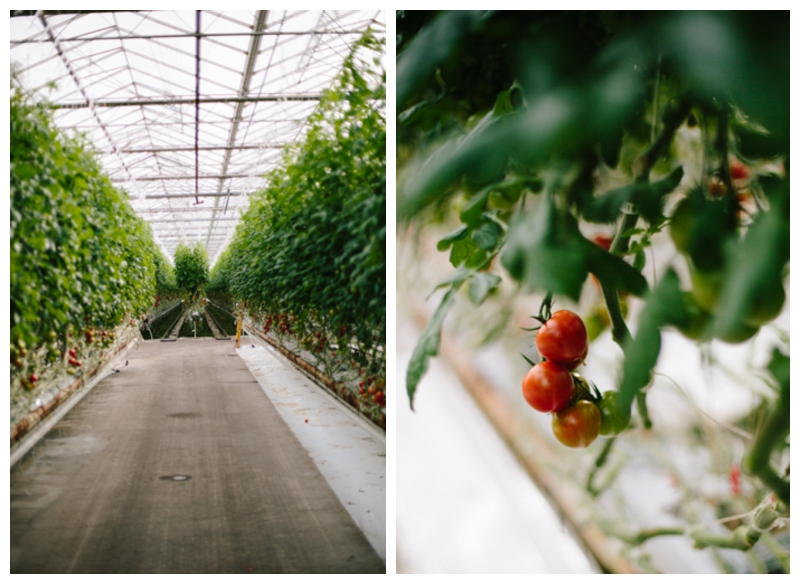 131221 Village Farms-4262.jpg