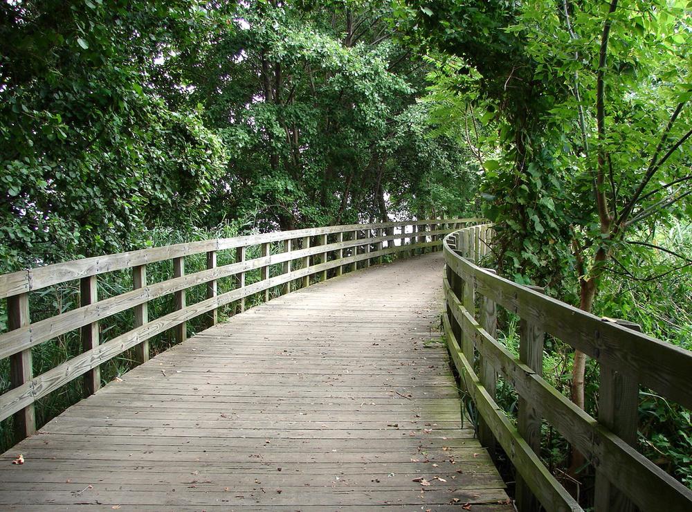 A Calm Walk Through Nature