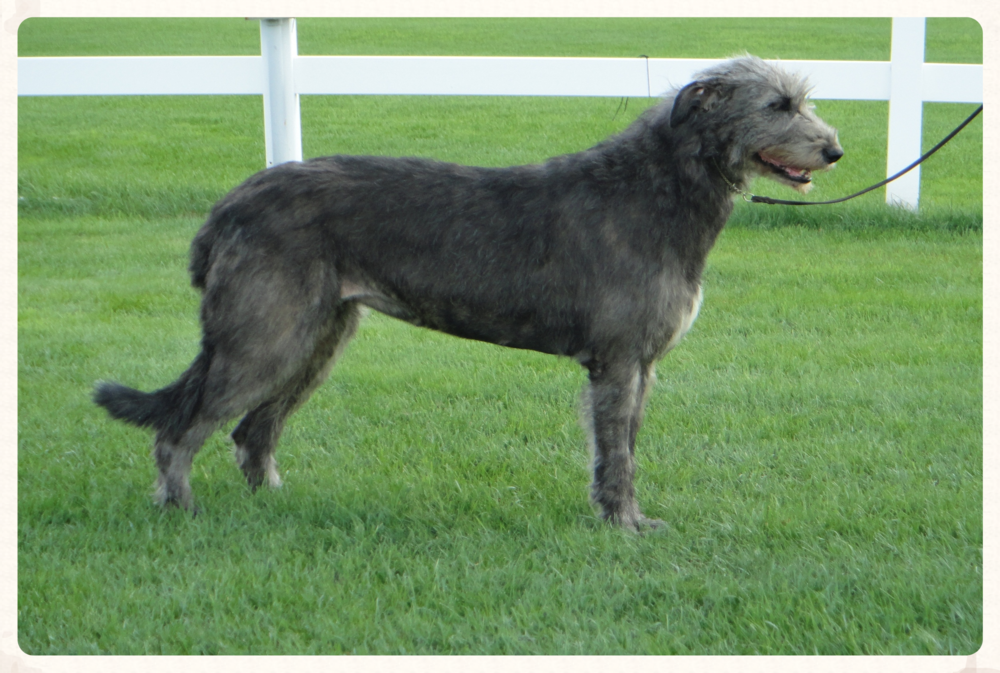 Ballyhara Darley after surgery. She was diagnosed with Gastrointestinal Stromal Tumor (GIST) carcinoma, although not definitive. From her initial symptoms, additional data, stain-kits and other mitigating factors, I firmly believe she died of Fibrosarcoma.