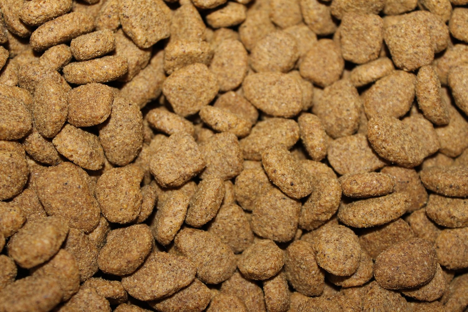 Irish wolfhound diet nutrition ballyhara irish wolfhounds commercial kibble geenschuldenfo Image collections