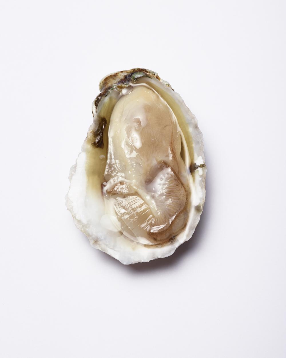 Bon Appetit 'Whitestone Oyster'