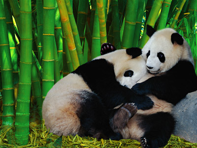 Bamboo is commonly used for incense cores (and for feeding cute pandas!)