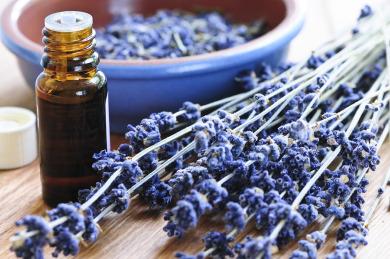 Making essential oil.jpg