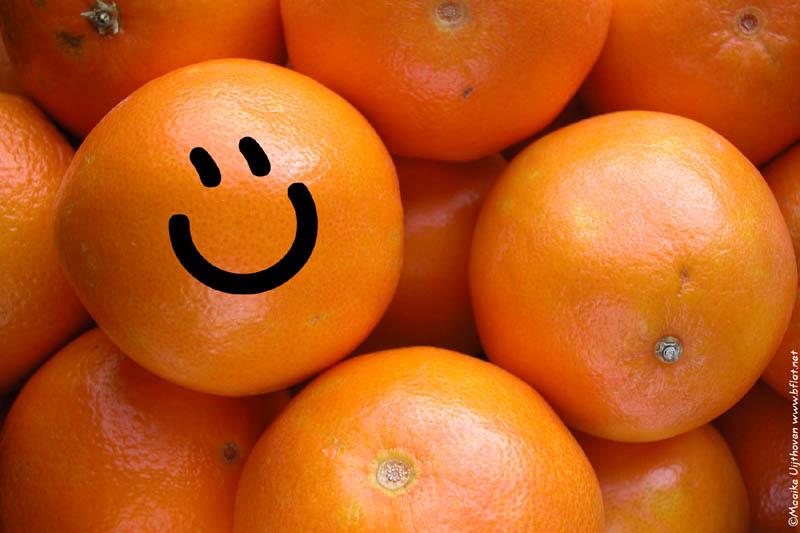 Happy oranges a plenty!
