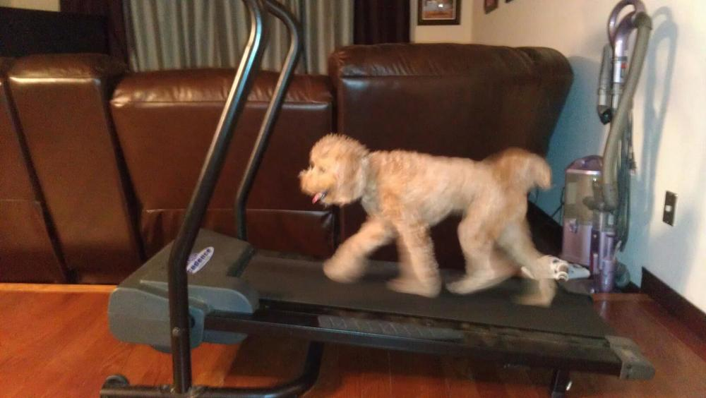 Treadmill Work