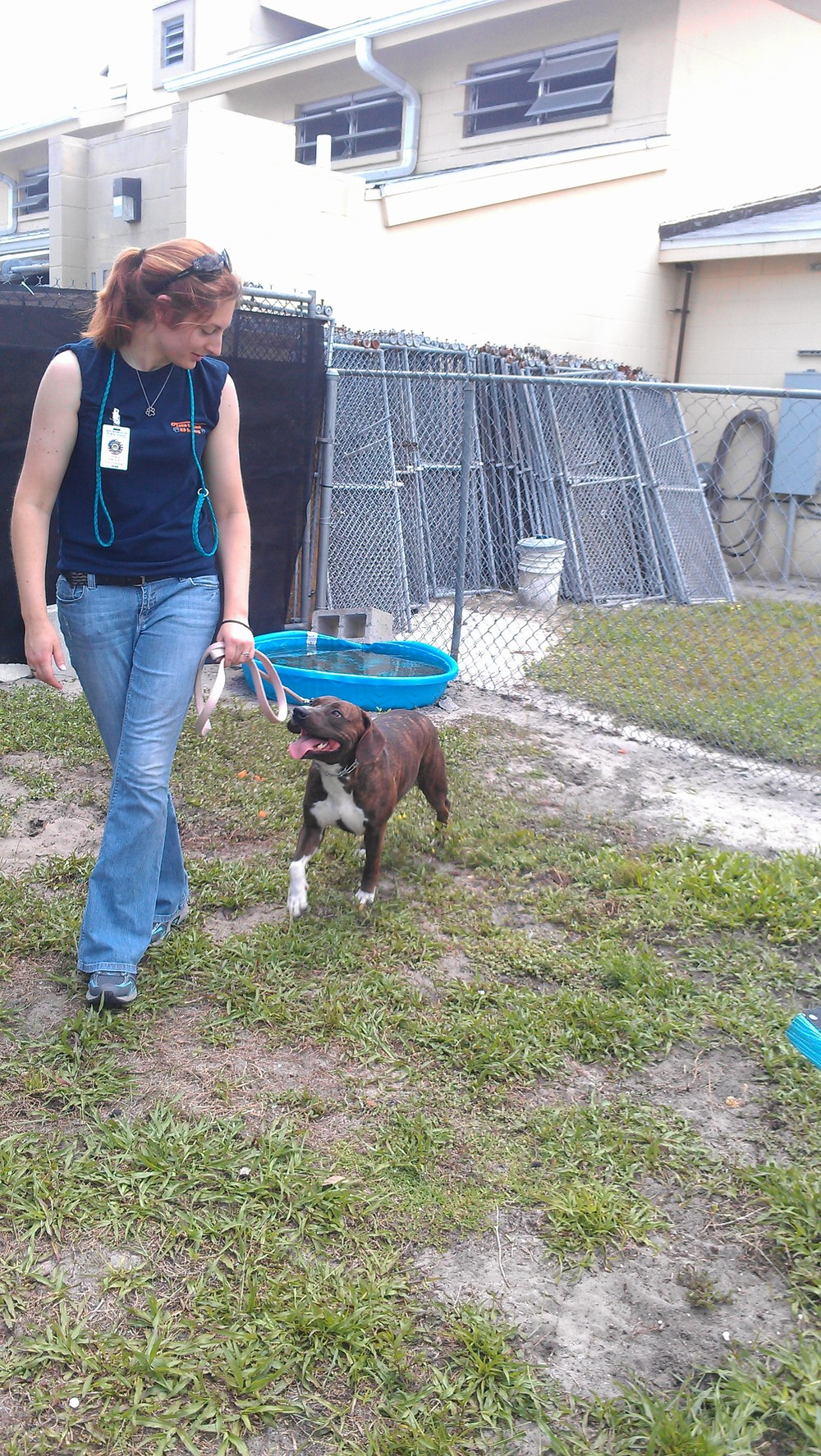 Victoria working with dogs at Seminole County Animal Services