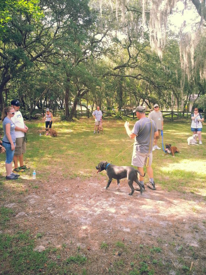Day At The Dog Park Ucf