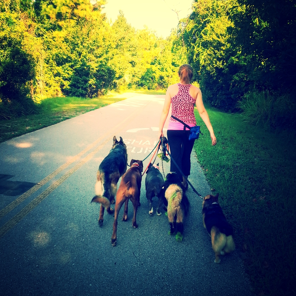 Pack Walks Orlando Florida